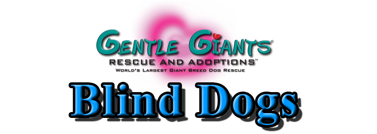 Blind Dogs at Gentle Giants Rescue and Adoptions